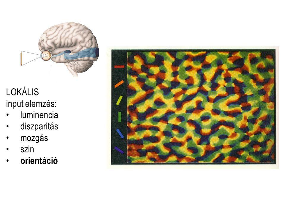 LOKÁLIS input elemzés: luminencia diszparitás mozgás szin orientáció
