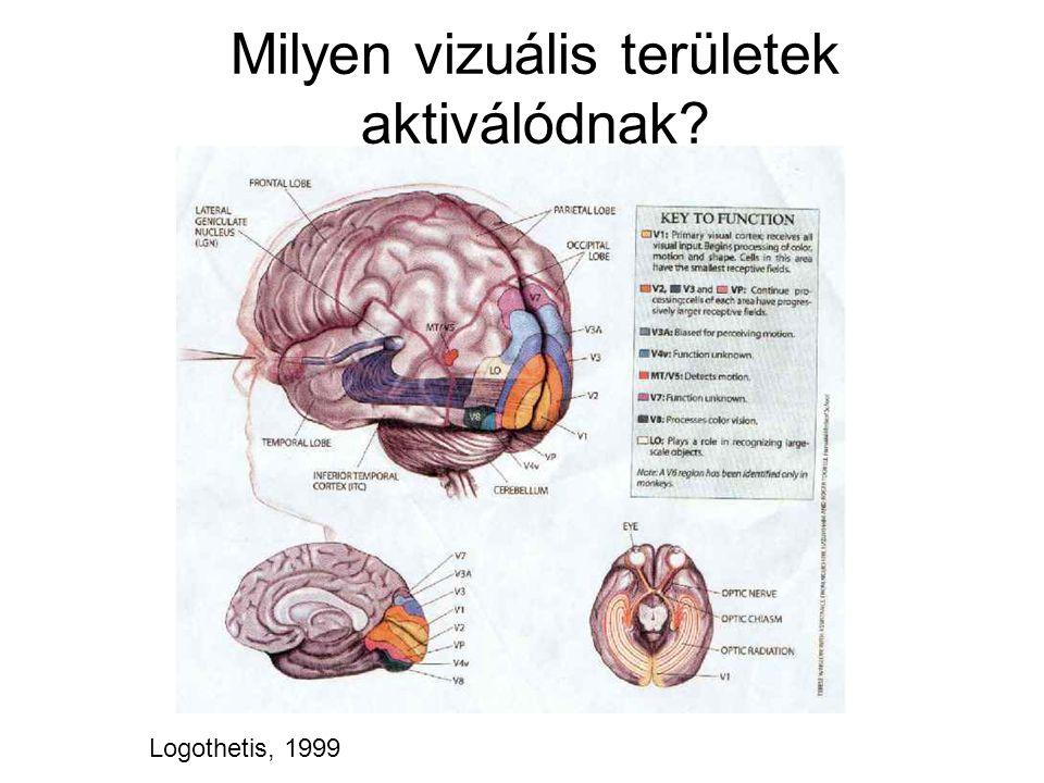 Milyen vizuális területek aktiválódnak? Logothetis, 1999
