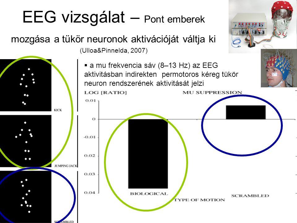 EEG vizsgálat – Pont emberek mozgása a tükör neuronok aktivációját váltja ki (Ulloa&Pinnelda, 2007)  a mu frekvencia sáv (8–13 Hz) az EEG aktivitásban indirekten permotoros kéreg tükör neuron rendszerének aktivitását jelzi v