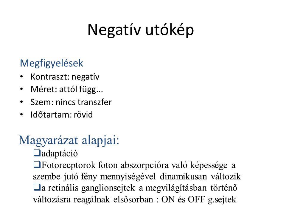 Negatív utókép Megfigyelések Kontraszt: negatív Méret: attól függ... Szem: nincs transzfer Időtartam: rövid Magyarázat alapjai:  adaptáció  Fotorecp