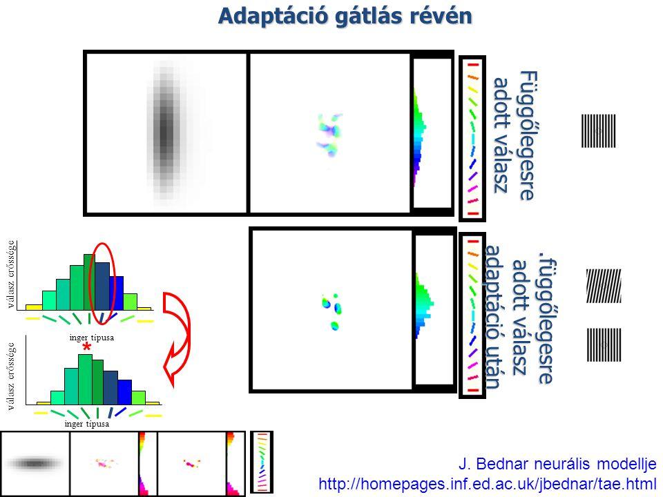 Adaptáció gátlás révén Függőlegesre adott válasz.függőlegesre adott válasz adaptáció után J. Bednar neurális modellje http://homepages.inf.ed.ac.uk/jb