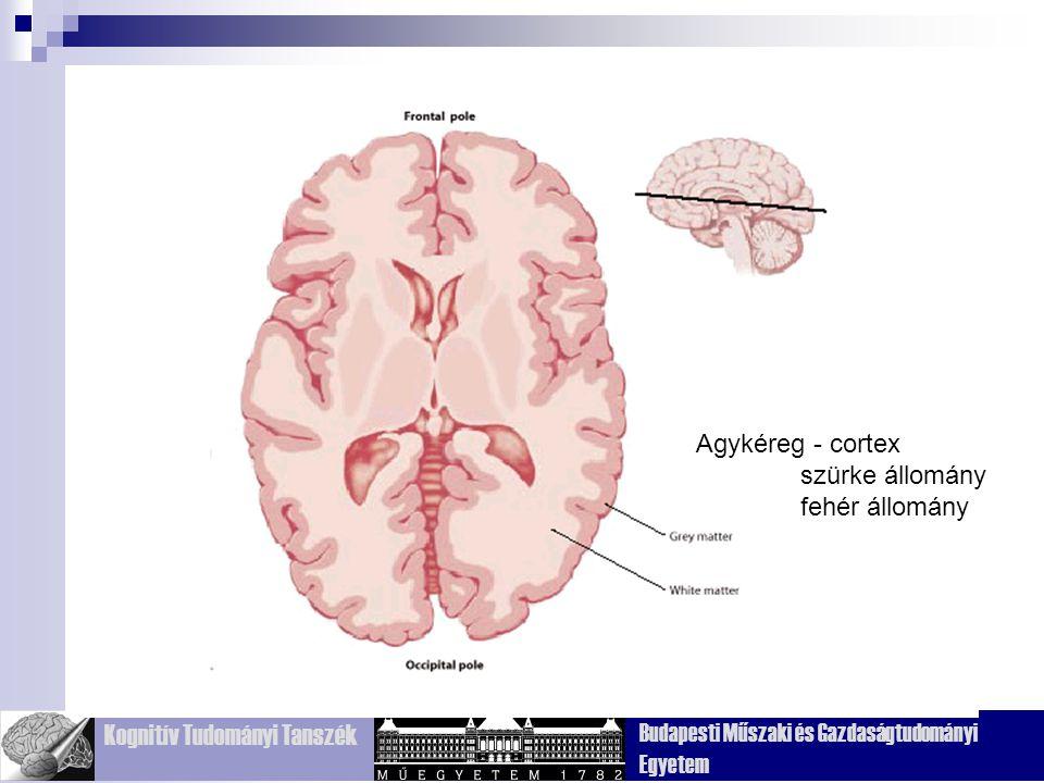 Kognitív Tudományi Tanszék Budapesti Műszaki és Gazdaságtudományi Egyetem Frontális (homlok) Temporális (halánték) Parietális (fali) Occipitális (nyak