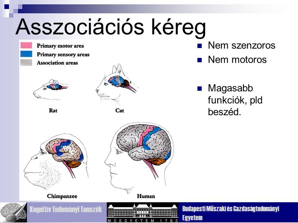 Kognitív Tudományi Tanszék Budapesti Műszaki és Gazdaságtudományi Egyetem Motoros kéreg – homloklebeny