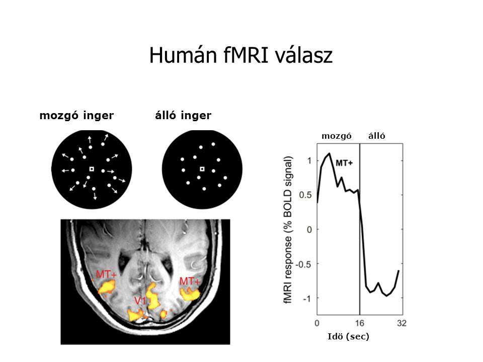 mozgó ingerálló inger állómozgó Idö (sec) Humán fMRI válasz