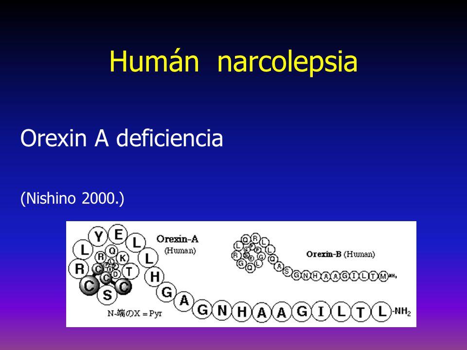 A narcolepsia más jellemzése REM disszociációs jelenségek Hízás Alvásrohamok Állandó álmosság Éjszakai töredezett alvás HLA társulás (a DQB1*0602 85-90%); alvás-ébrenlét ritmuszavar