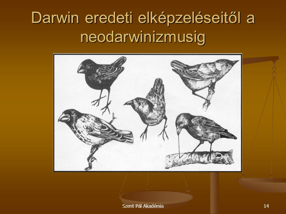 Szent Pál Akadémia14 Darwin eredeti elképzeléseitől a neodarwinizmusig