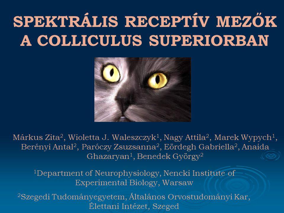 KÖVETKEZTETÉSEK A colliculus superior neuronok spatio- temporális sajátságai nagy hasonlóságot mutatnak a retinális bemenetüket képező Y- és W-sejtekével, valamint kérgi, mozgást érzékelő területekkel.