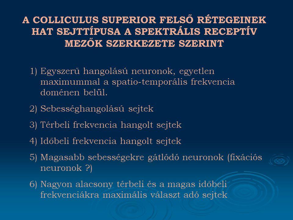 EREDMÉNYEK IV. KÜLÖNBÖZŐ SPEKTRÁLIS TULAJDONSÁGÚ COLLICULUS SUPERIOR NEURONOK RECEPTÍV MEZŐI I.