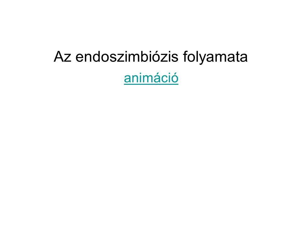 Az endoszimbiózis folyamata animáció