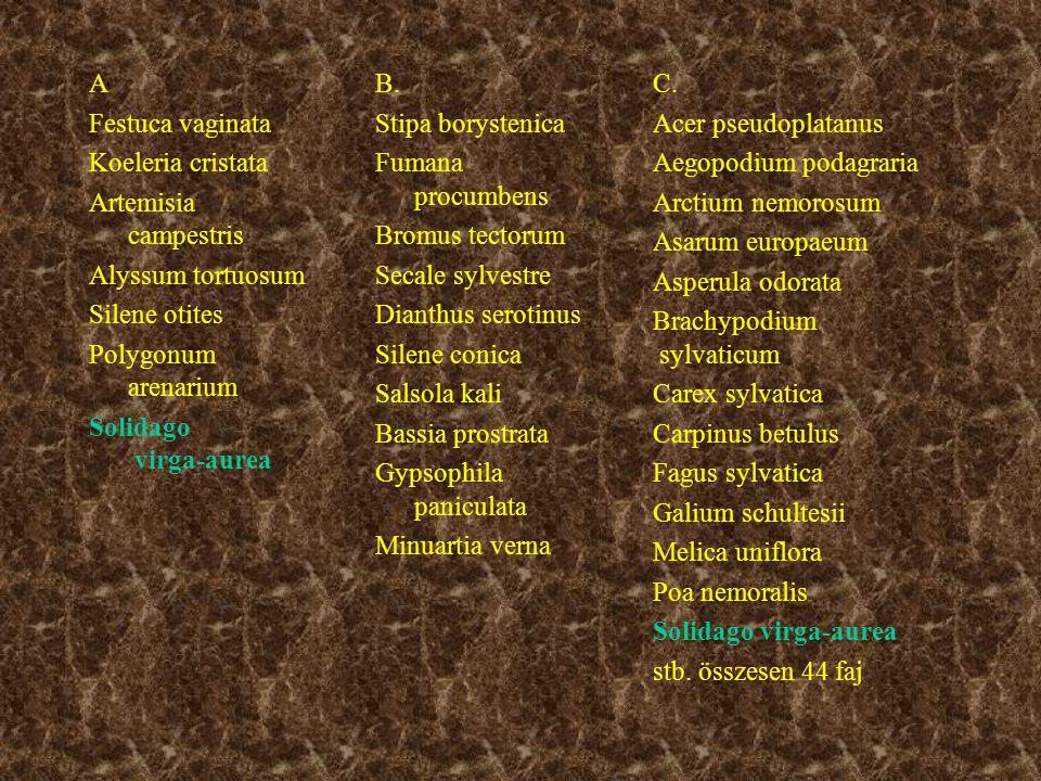 A Festuca vaginata Koeleria cristata Artemisia campestris Alyssum tortuosum Silene otites Polygonum arenarium Solidago virga-aurea B.