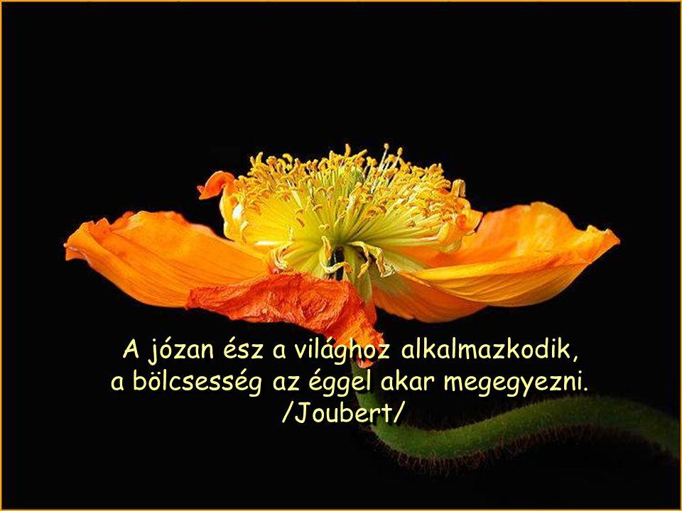A józan ész a világhoz alkalmazkodik, a bölcsesség az éggel akar megegyezni.