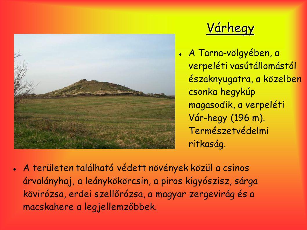 Várhegy A Tarna-völgyében, a verpeléti vasútállomástól északnyugatra, a közelben csonka hegykúp magasodik, a verpeléti Vár-hegy (196 m). Természetvéde