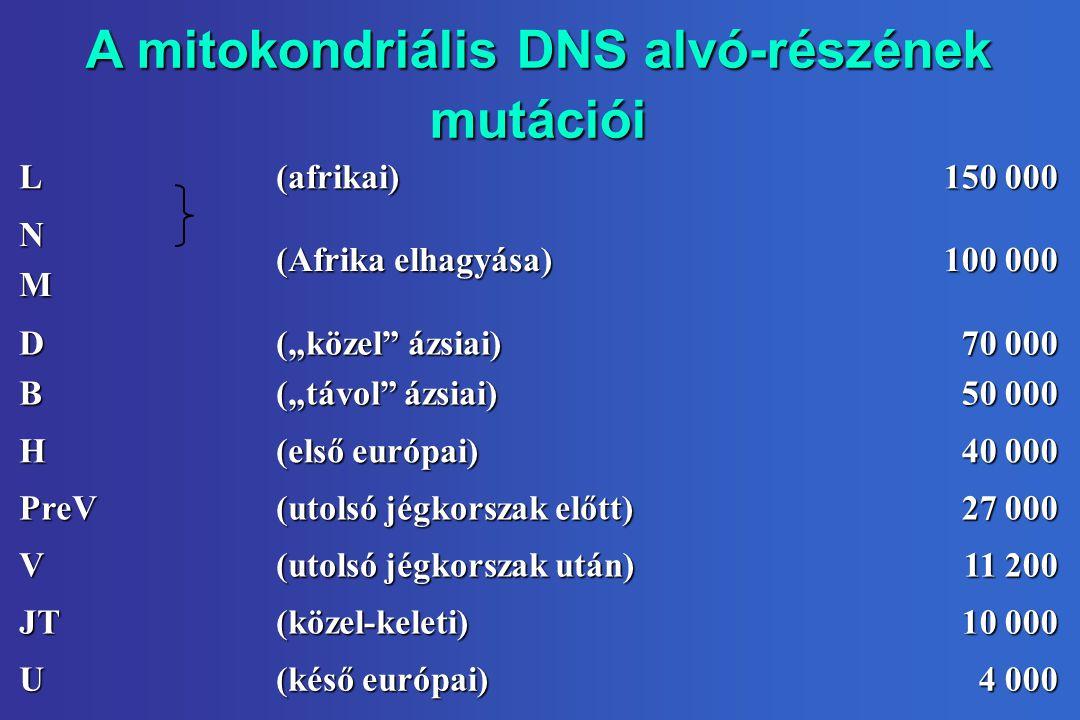 """A mitokondriális DNS alvó-részének mutációi L(afrikai) 150 000 NM (Afrika elhagyása) 100 000 DB (""""közel ázsiai) (""""távol ázsiai) 70 000 50 000 H (első európai) 40 000 PreV (utolsó jégkorszak előtt) 27 000 V (utolsó jégkorszak után) 11 200 JT(közel-keleti) 10 000 U (késő európai) 4 000"""