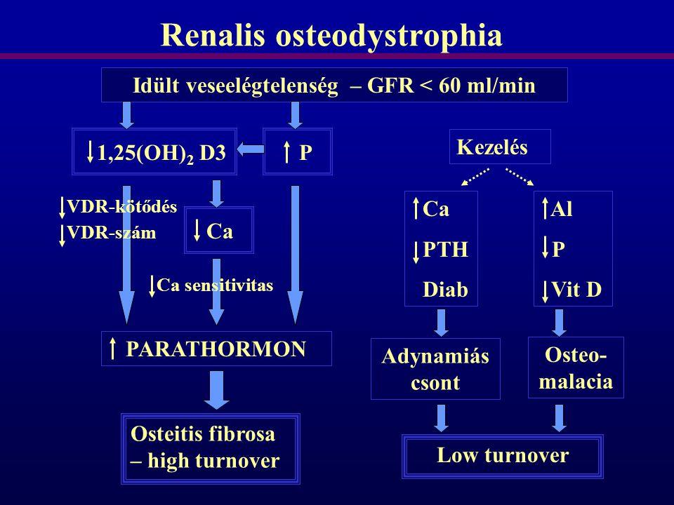 Renalis osteodystrophia Idült veseelégtelenség – GFR < 60 ml/min 1,25(OH) 2 D3P VDR-kötődés VDR-szám Ca PARATHORMON Ca sensitivitas Osteitis fibrosa –