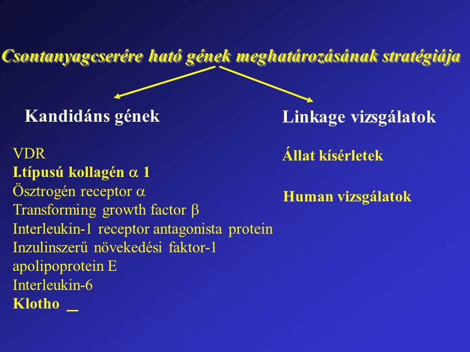 Csontanyagcserére ható gének meghatározásának stratégiája Kandidáns gének Linkage vizsgálatok VDR I.típusú kollagén  1 Ösztrogén receptor  Transforming growth factor  Interleukin-1 receptor antagonista protein Inzulinszerű növekedési faktor-1 apolipoprotein E Interleukin-6 Klotho Állat kísérletek Human vizsgálatok