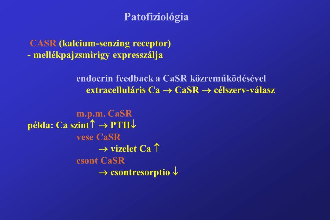 Patofiziológia CASR (kalcium-senzing receptor) - mellékpajzsmirigy expresszálja endocrin feedback a CaSR közreműködésével extracelluláris Ca  CaSR  célszerv-válasz m.p.m.