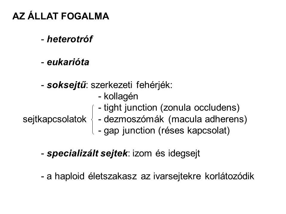 AZ ÁLLAT FOGALMA - heterotróf - eukarióta - soksejtű: szerkezeti fehérjék: - kollagén - tight junction (zonula occludens) sejtkapcsolatok- dezmoszómák