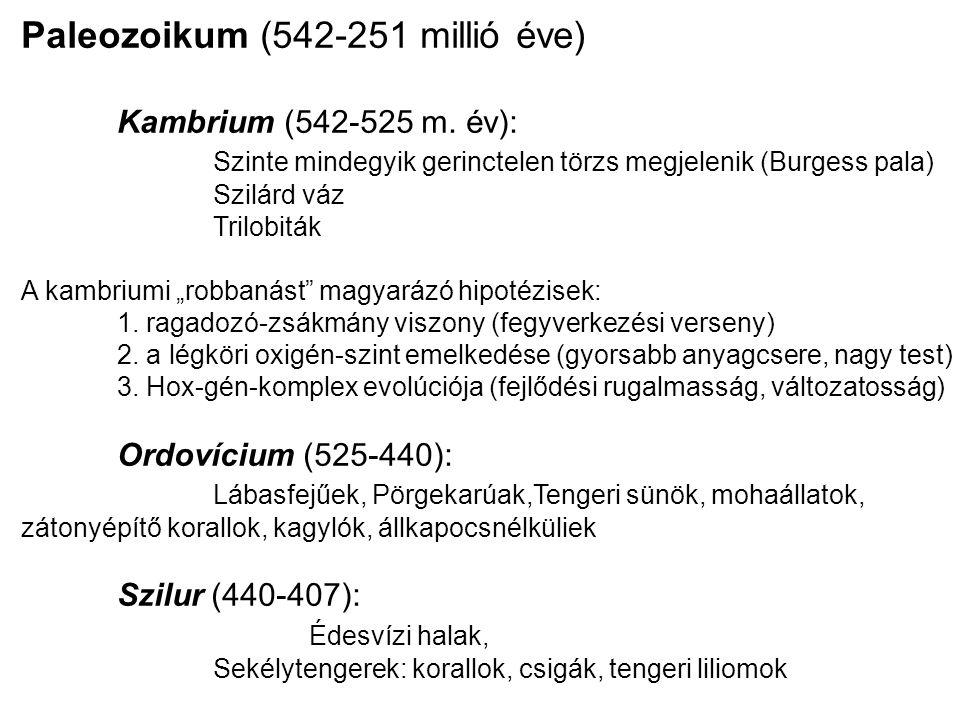 Paleozoikum (542-251 millió éve) Kambrium (542-525 m. év): Szinte mindegyik gerinctelen törzs megjelenik (Burgess pala) Szilárd váz Trilobiták A kambr