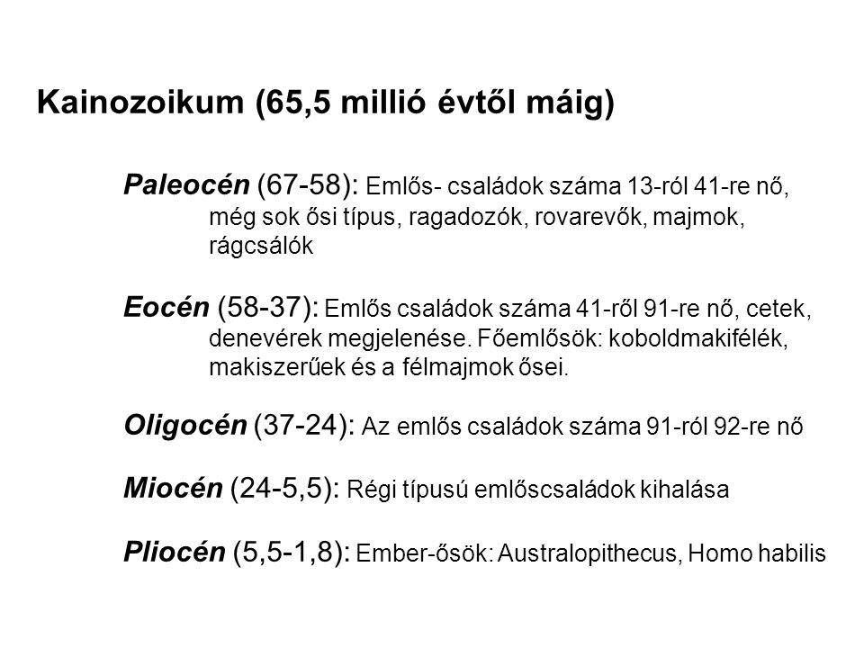 Kainozoikum (65,5 millió évtől máig) Paleocén (67-58): Emlős- családok száma 13-ról 41-re nő, még sok ősi típus, ragadozók, rovarevők, majmok, rágcsál