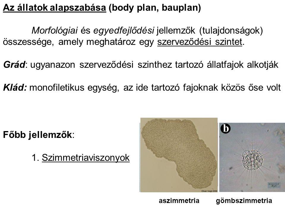 Az állatok alapszabása (body plan, bauplan) Morfológiai és egyedfejlődési jellemzők (tulajdonságok) összessége, amely meghatároz egy szerveződési szin