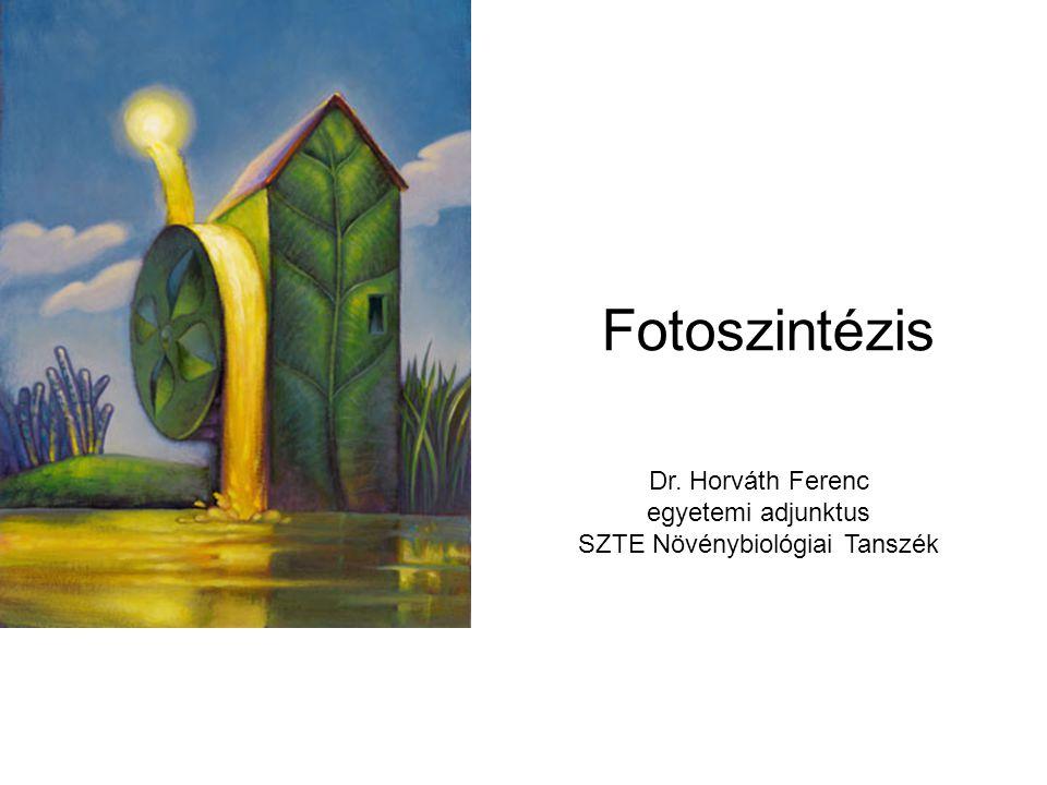 Fotoszintézis Dr. Horváth Ferenc egyetemi adjunktus SZTE Növénybiológiai Tanszék