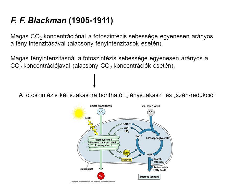 F. F. Blackman (1905-1911) Magas CO 2 koncentrációnál a fotoszintézis sebessége egyenesen arányos a fény intenzitásával (alacsony fényintenzitások ese