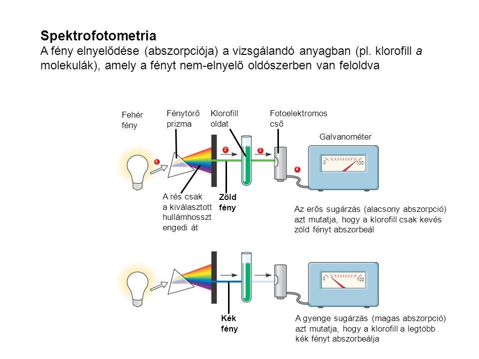 Spektrofotometria A fény elnyelődése (abszorpciója) a vizsgálandó anyagban (pl. klorofill a molekulák), amely a fényt nem-elnyelő oldószerben van felo