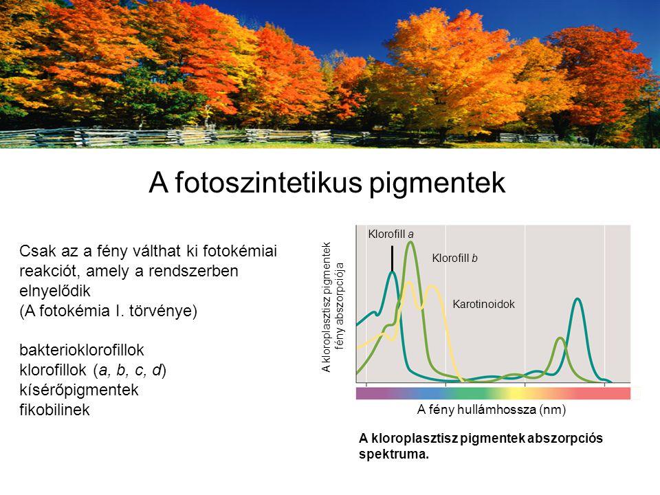 Csak az a fény válthat ki fotokémiai reakciót, amely a rendszerben elnyelődik (A fotokémia I. törvénye) bakterioklorofillok klorofillok (a, b, c, d) k