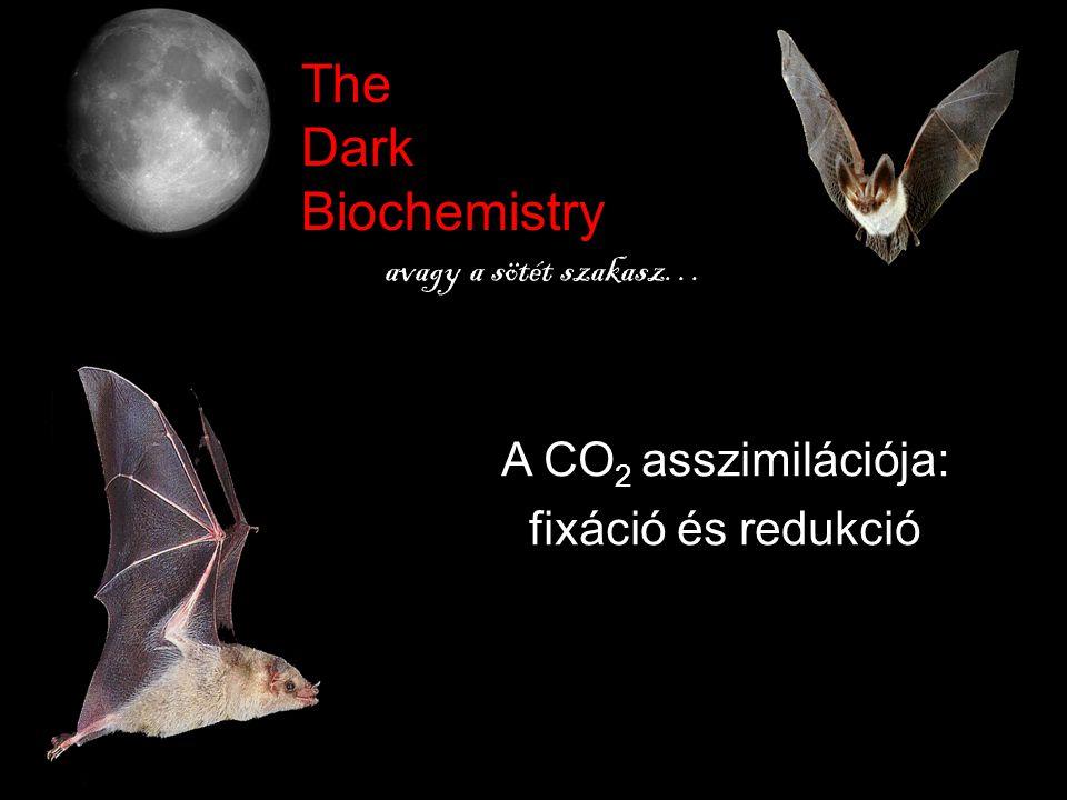 The Dark Biochemistry avagy a sötét szakasz… A CO 2 asszimilációja: fixáció és redukció