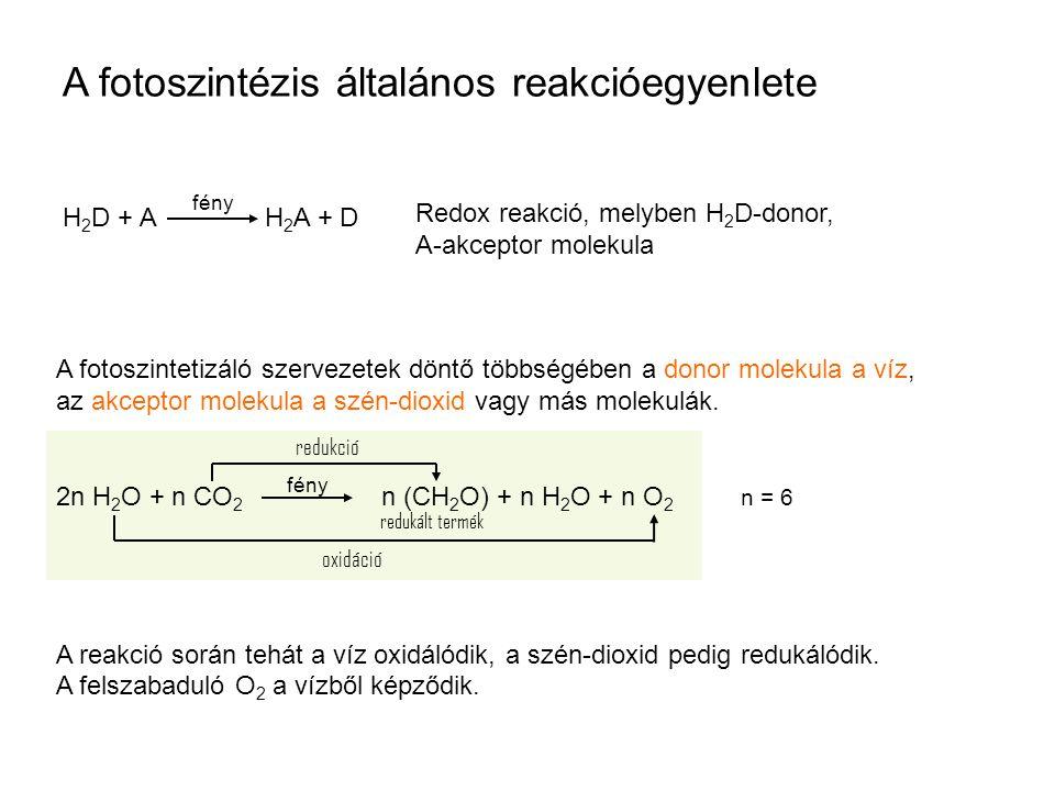 A fotoszintézis általános reakcióegyenlete H 2 D + A H 2 A + D Redox reakció, melyben H 2 D-donor, A-akceptor molekula fény A fotoszintetizáló szervez