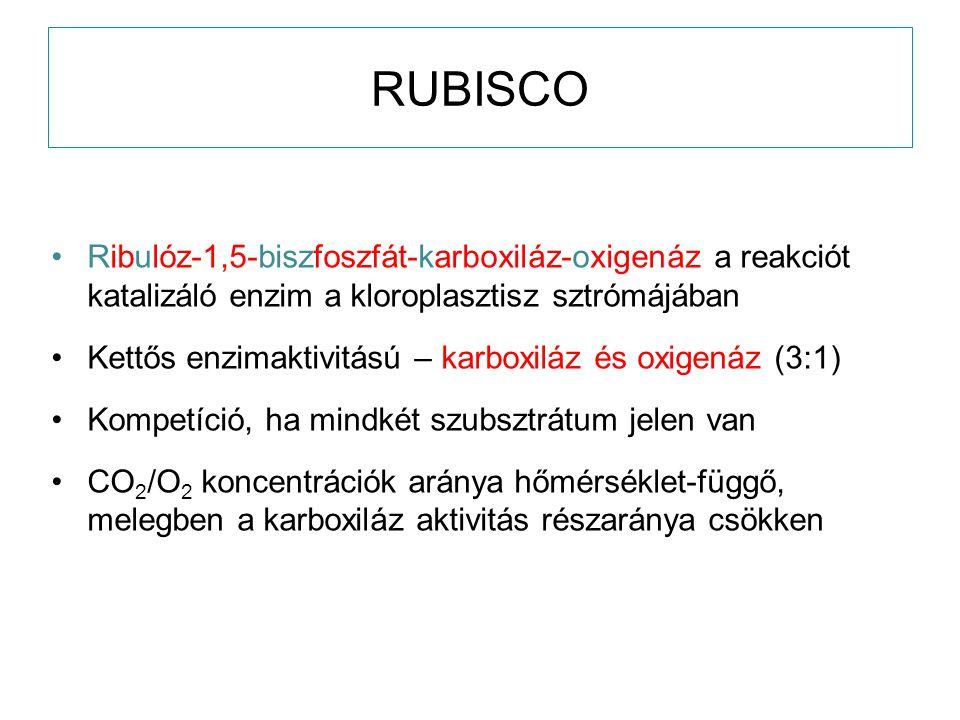 RUBISCO Ribulóz-1,5-biszfoszfát-karboxiláz-oxigenáz a reakciót katalizáló enzim a kloroplasztisz sztrómájában Kettős enzimaktivitású – karboxiláz és o
