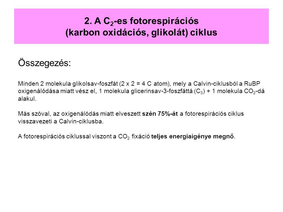 Összegezés: Minden 2 molekula glikolsav-foszfát (2 x 2 = 4 C atom), mely a Calvin-ciklusból a RuBP oxigenálódása miatt vész el, 1 molekula glicerinsav
