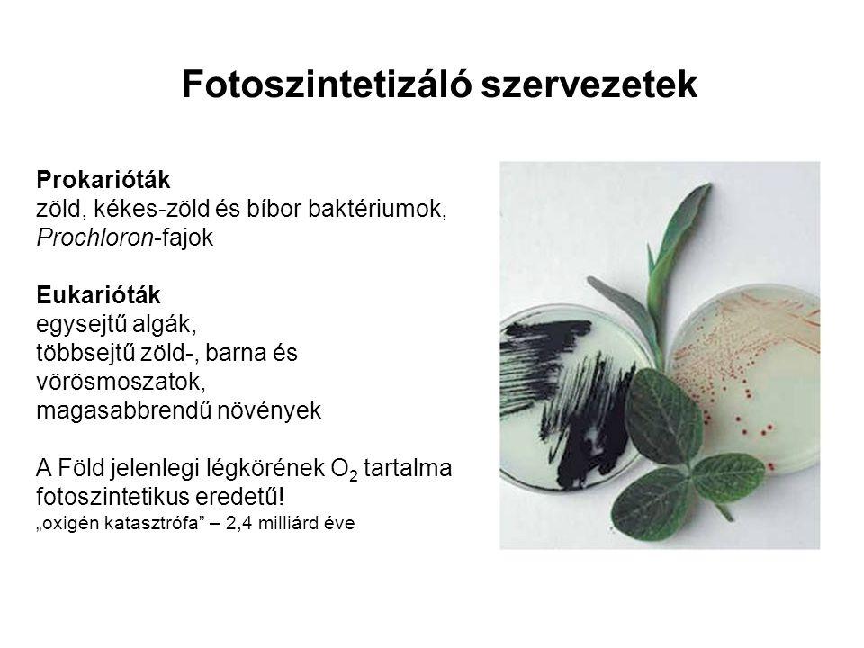 Levélér Levél keresztmetszet Mezofillum CO 2 O2O2 Sztómák A növények levele –A fotoszintézis legfőbb helyszíne