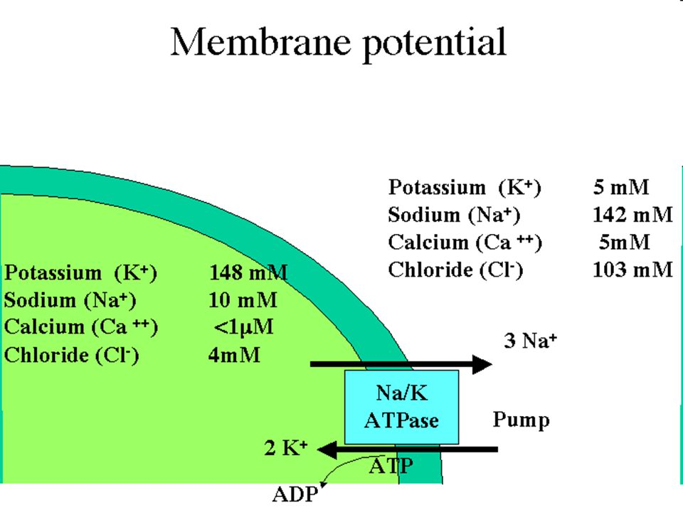 Koncentrációs elem Ugyanaz a fém (pl. Cu/Cu), de az ionok eltérő koncentrációban Ilyenkor EMF =