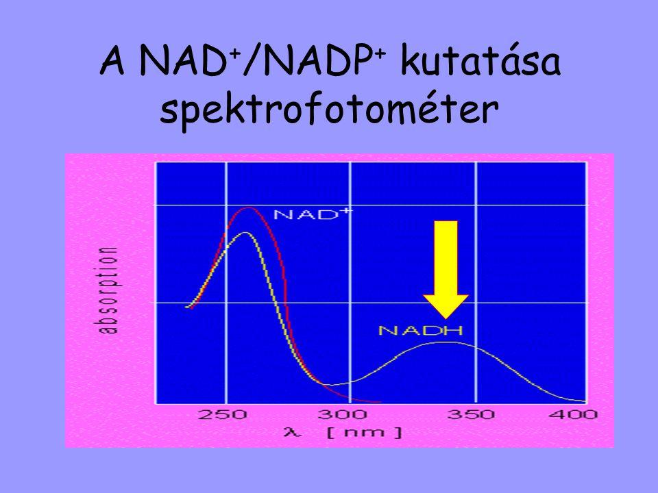 A NAD + /NADP + kutatása spektrofotométer