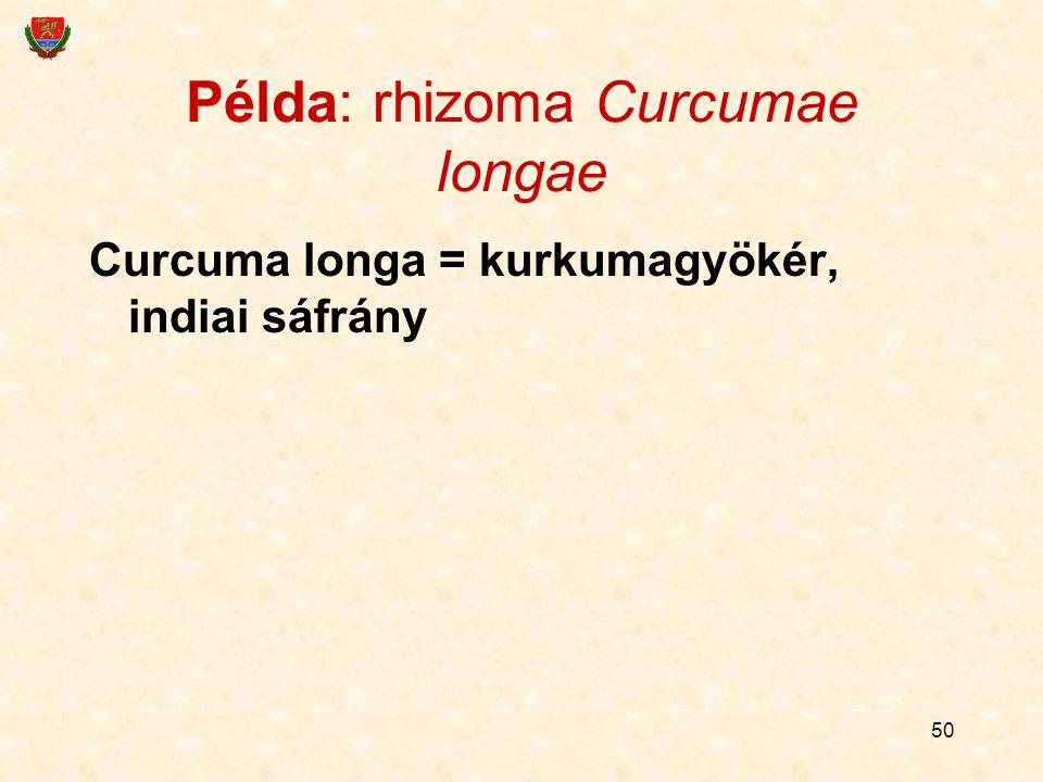 50 Példa: rhizoma Curcumae longae Curcuma longa = kurkumagyökér, indiai sáfrány
