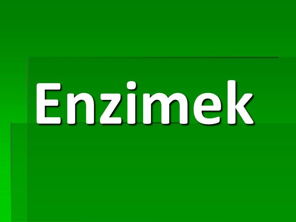 Az enzimek kémiai vonatkozásai Minden enzim fehérje