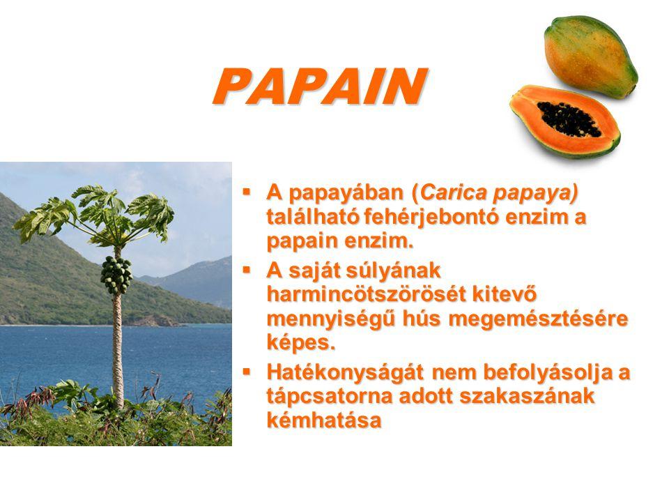 PAPAIN  A papayában (Carica papaya) található fehérjebontó enzim a papain enzim.  A saját súlyának harmincötszörösét kitevő mennyiségű hús megemészt