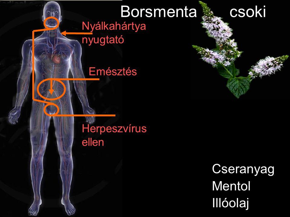 Cseranyag Mentol Illóolaj Herpeszvírus ellen Nyálkahártya nyugtató Borsmenta csoki Emésztés