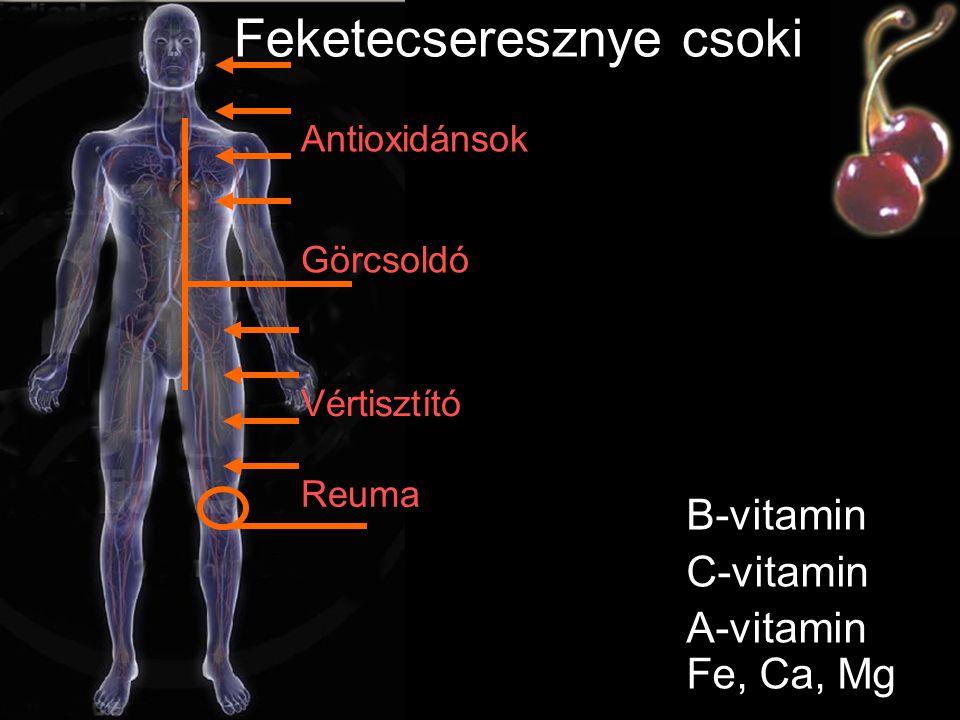 Ginszenoidok Szaponinok Aminosavak Vitaminok Ginseng csoki Antioxidánsok Immunerősítő Érvédő Rákmegelőző Szellemi, fizikai teljesítőképesség