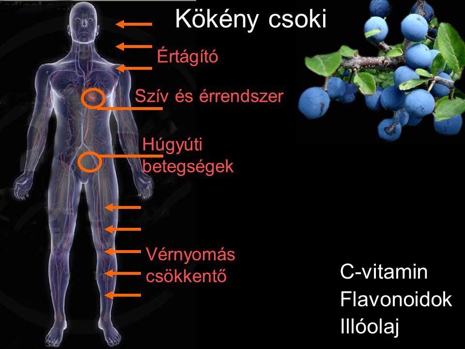 C-vitamin Flavonoidok Illóolaj Szív és érrendszer Húgyúti betegségek Értágító Kökény csoki Vérnyomás csökkentő