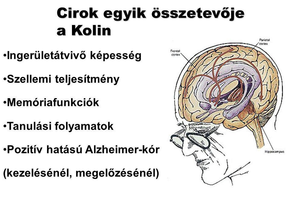Cirok egyik összetevője a Kolin Ingerületátvivő képesség Szellemi teljesítmény Memóriafunkciók Tanulási folyamatok Pozitív hatású Alzheimer-kór (kezelésénél, megelőzésénél)