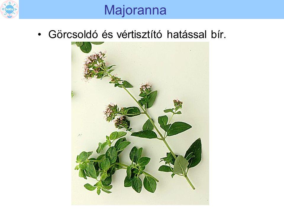 Majoranna Görcsoldó és vértisztító hatással bír.