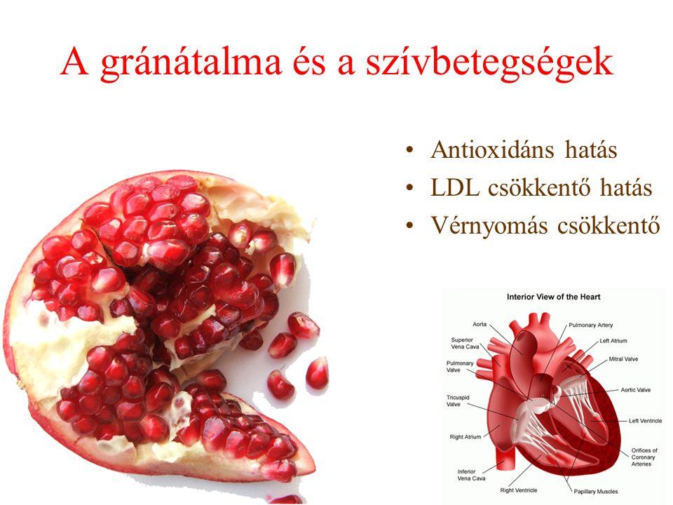 A gránátalma és a szívbetegségek Antioxidáns hatás LDL csökkentő hatás Vérnyomás csökkentő