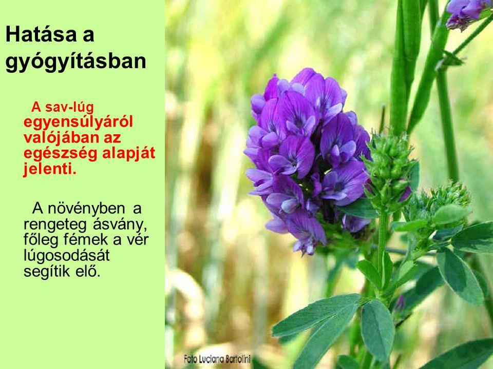 A sav-lúg egyensúlyáról valójában az egészség alapját jelenti. A növényben a rengeteg ásvány, főleg fémek a vér lúgosodását segítik elő. Hatása a gyóg