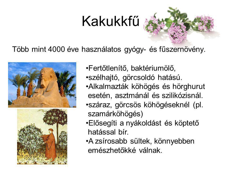 Kakukkfű Több mint 4000 éve használatos gyógy- és fűszernövény. Fertőtlenítő, baktériumölő, szélhajtó, görcsoldó hatású. Alkalmazták köhögés és hörghu
