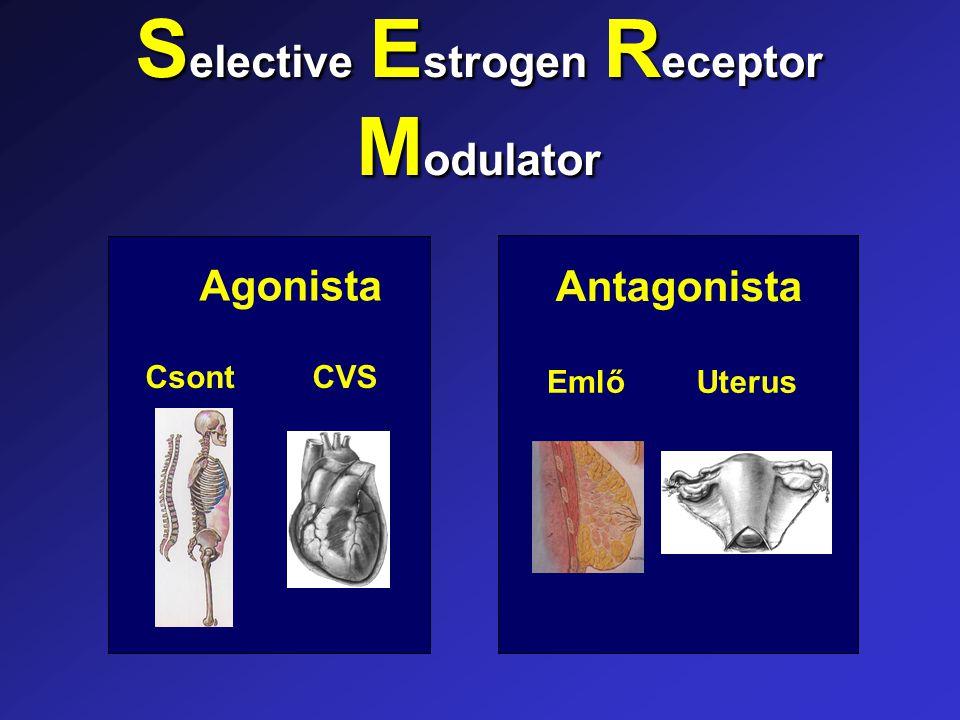 Agonista CsontCVS Antagonista EmlőUterus S elective E strogen R eceptor M odulator