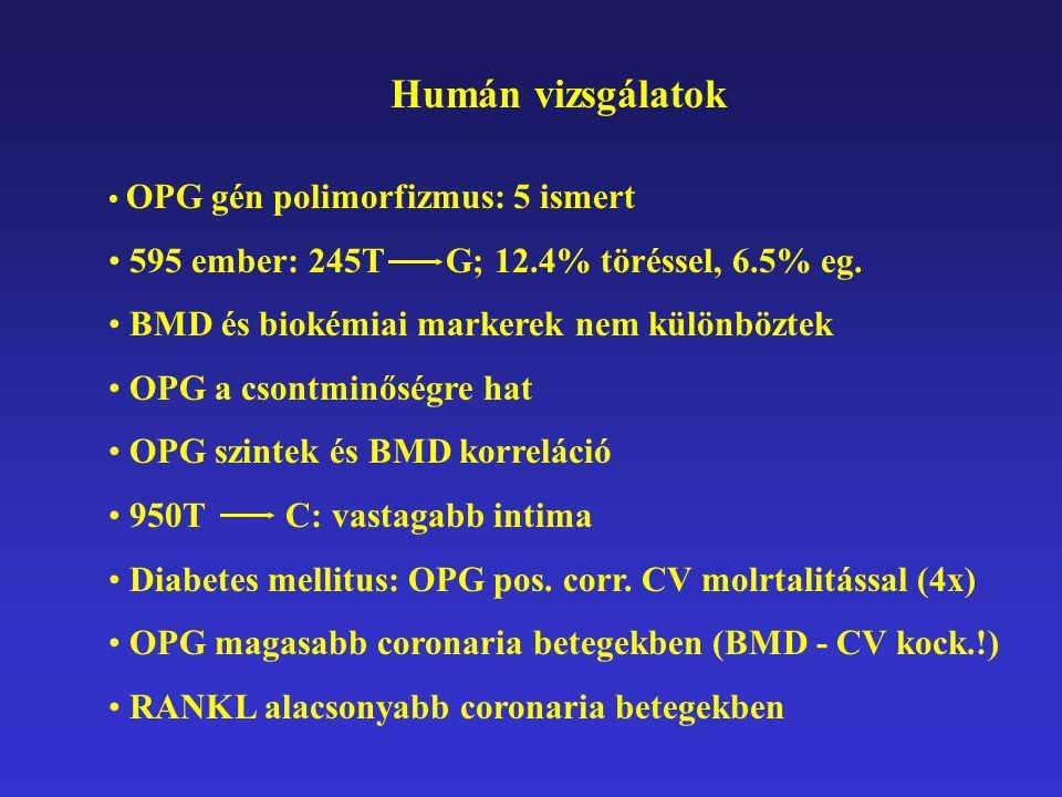 Humán vizsgálatok OPG gén polimorfizmus: 5 ismert 595 ember: 245T G; 12.4% töréssel, 6.5% eg. BMD és biokémiai markerek nem különböztek OPG a csontmin