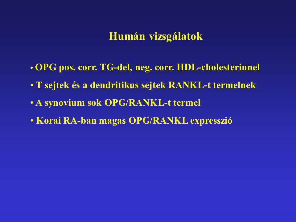 Humán vizsgálatok OPG pos. corr. TG-del, neg. corr. HDL-cholesterinnel T sejtek és a dendritikus sejtek RANKL-t termelnek A synovium sok OPG/RANKL-t t