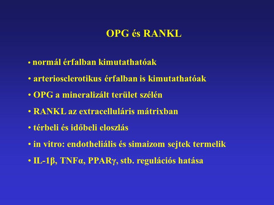 OPG és RANKL normál érfalban kimutathatóak arteriosclerotikus érfalban is kimutathatóak OPG a mineralizált terület szélén RANKL az extracelluláris mát
